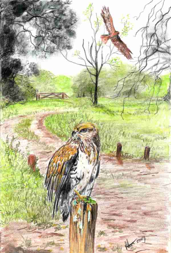 Buzzard by Paulene Smith